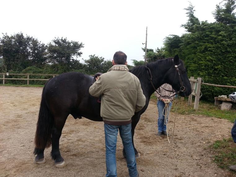 Stage le cheval miroir - Metafor - Virginie Kersaudy
