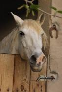 Le cheval miroir